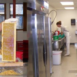 Timely Topics – How to Harvest & Extract Honey – July 18, 1-3 pm