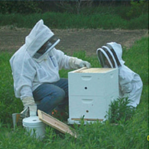 Is Beekeeping for Me  &  The Beekeeper's Year – Sat Feb 1 from 1-3 pm