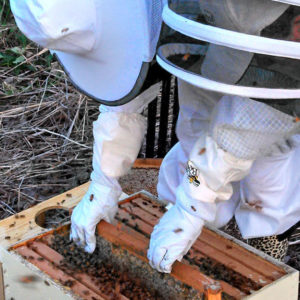 Mad Urban Bees Beekeeping Fundamentals Class February 22nd – Door Prize Entry