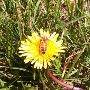 Timely Topics – Honey Production Strategies – Available after May 2
