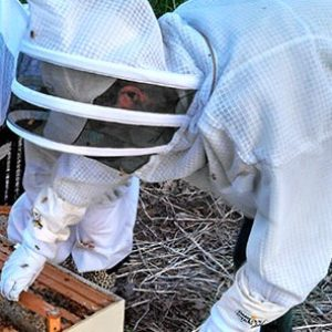 2019 Is Beekeeping for Me? – Tues Mar 12
